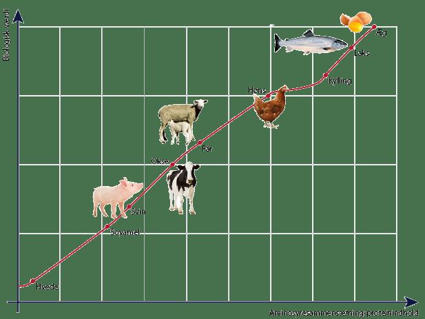 proteinlinjen Gamedog