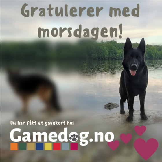 Gavekort Gamedog